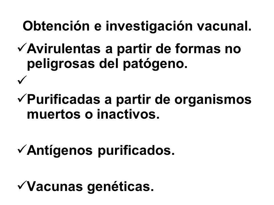 Obtención e investigación vacunal. Avirulentas a partir de formas no peligrosas del patógeno. Purificadas a partir de organismos muertos o inactivos.