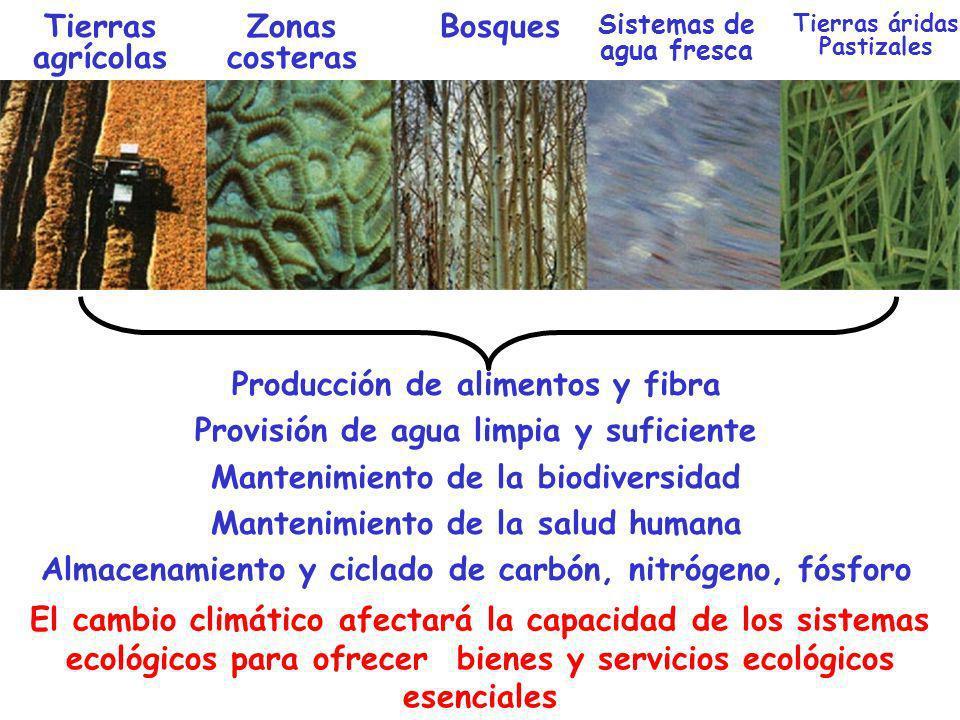 Producción de alimentos y fibra Provisión de agua limpia y suficiente Mantenimiento de la biodiversidad Mantenimiento de la salud humana Almacenamient