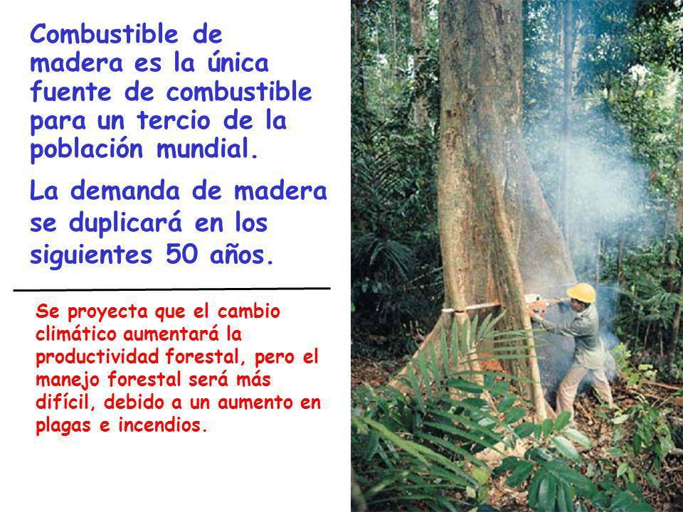 Combustible de madera es la única fuente de combustible para un tercio de la población mundial. La demanda de madera se duplicará en los siguientes 50