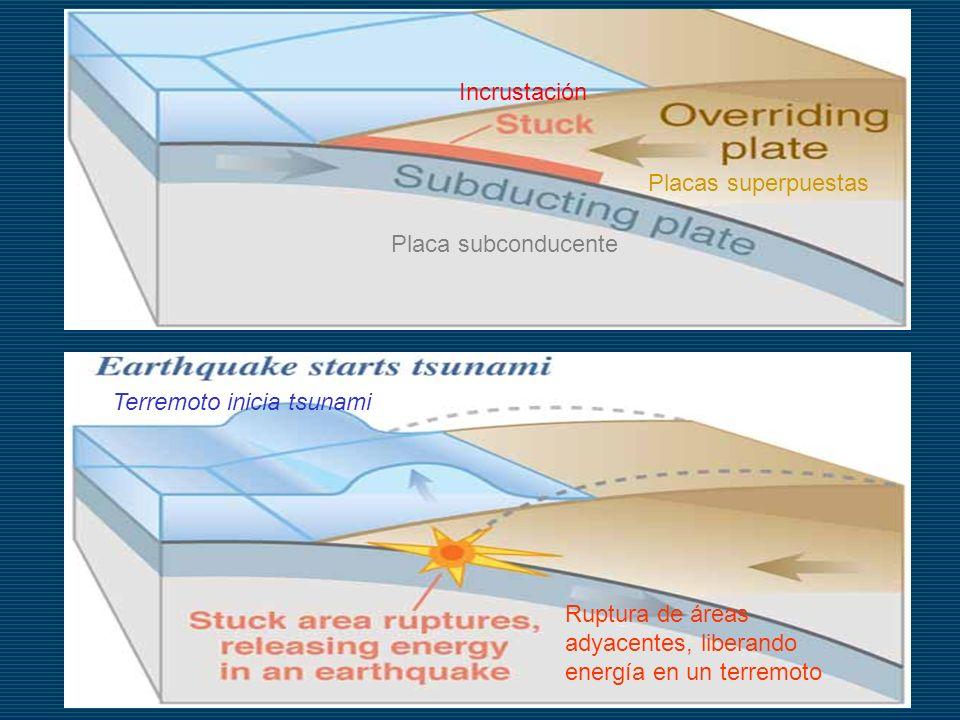 Placas superpuestas Terremoto inicia tsunami Ruptura de áreas adyacentes, liberando energía en un terremoto Incrustación Placa subconducente