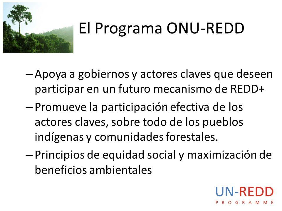 – Apoya a gobiernos y actores claves que deseen participar en un futuro mecanismo de REDD+ – Promueve la participación efectiva de los actores claves, sobre todo de los pueblos indígenas y comunidades forestales.
