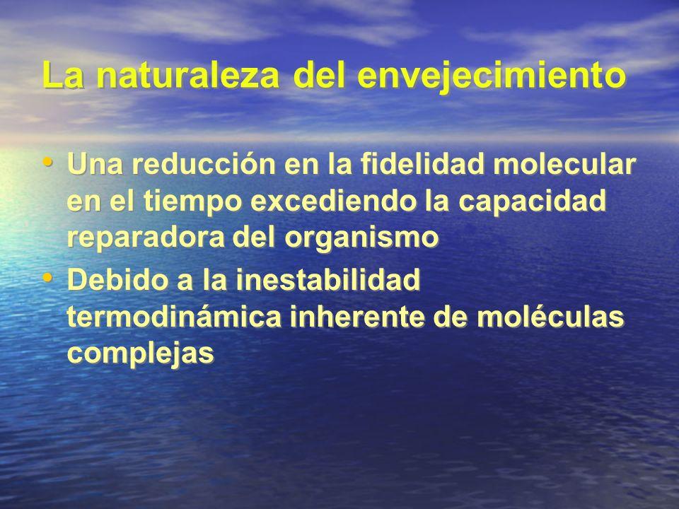 La naturaleza del envejecimiento Una reducción en la fidelidad molecular en el tiempo excediendo la capacidad reparadora del organismo Debido a la ine