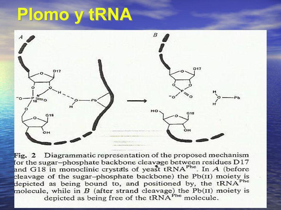 Plomo y tRNA