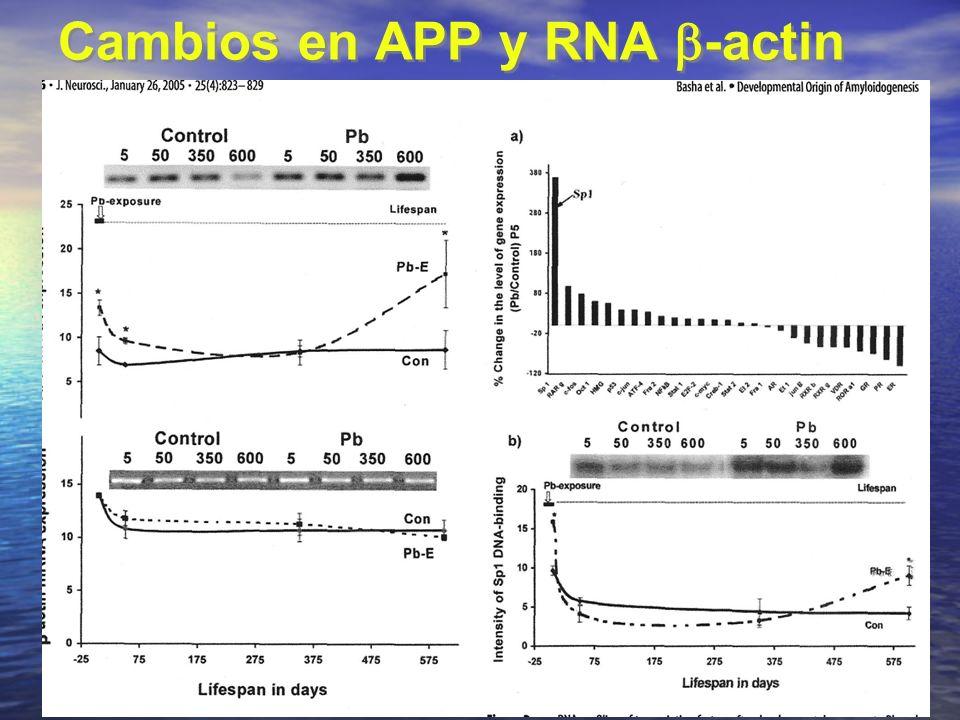 Cambios en APP y RNA -actin