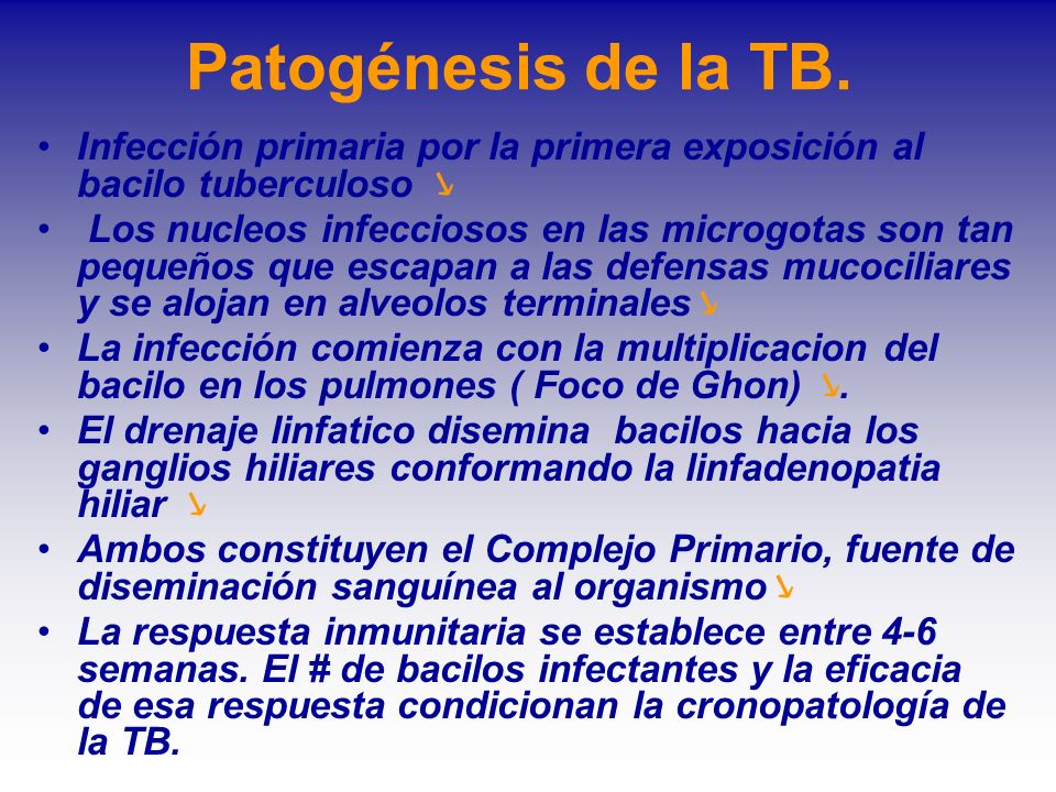 Patogénesis de la TB. Infección primaria por la primera exposición al bacilo tuberculoso Los nucleos infecciosos en las microgotas son tan pequeños qu
