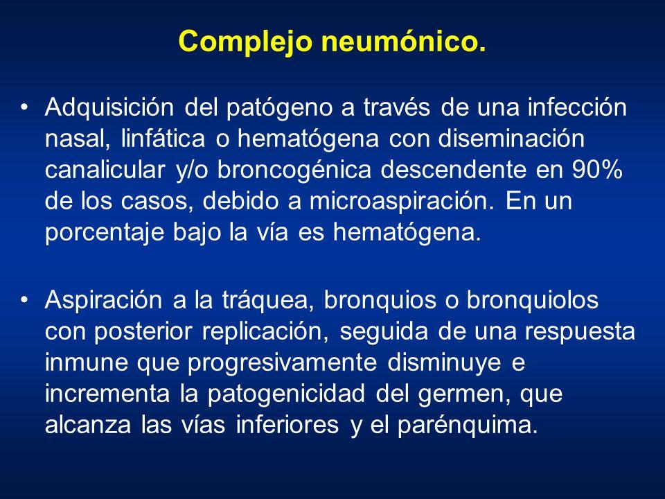 Complejo neumónico. Adquisición del patógeno a través de una infección nasal, linfática o hematógena con diseminación canalicular y/o broncogénica des
