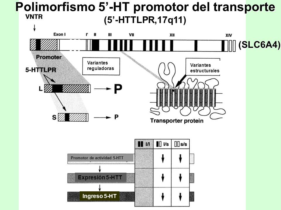 Adapted from Lesch & Mossner, Biol Psychiatry 44 1998 Polimorfismo 5-HT promotor del transporte (5-HTTLPR,17q11) (SLC6A4) Variantes reguladoras Varian