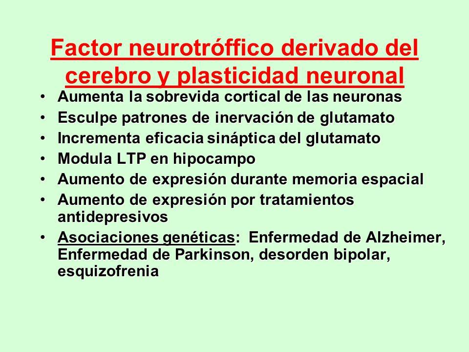 Factor neurotróffico derivado del cerebro y plasticidad neuronal Aumenta la sobrevida cortical de las neuronasAumenta la sobrevida cortical de las neu