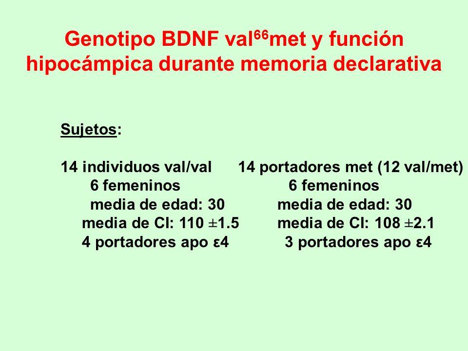Genotipo BDNF val 66 met y función hipocámpica durante memoria declarativa Sujetos: 14 individuos val/val 14 portadores met (12 val/met) 6 femeninos 6