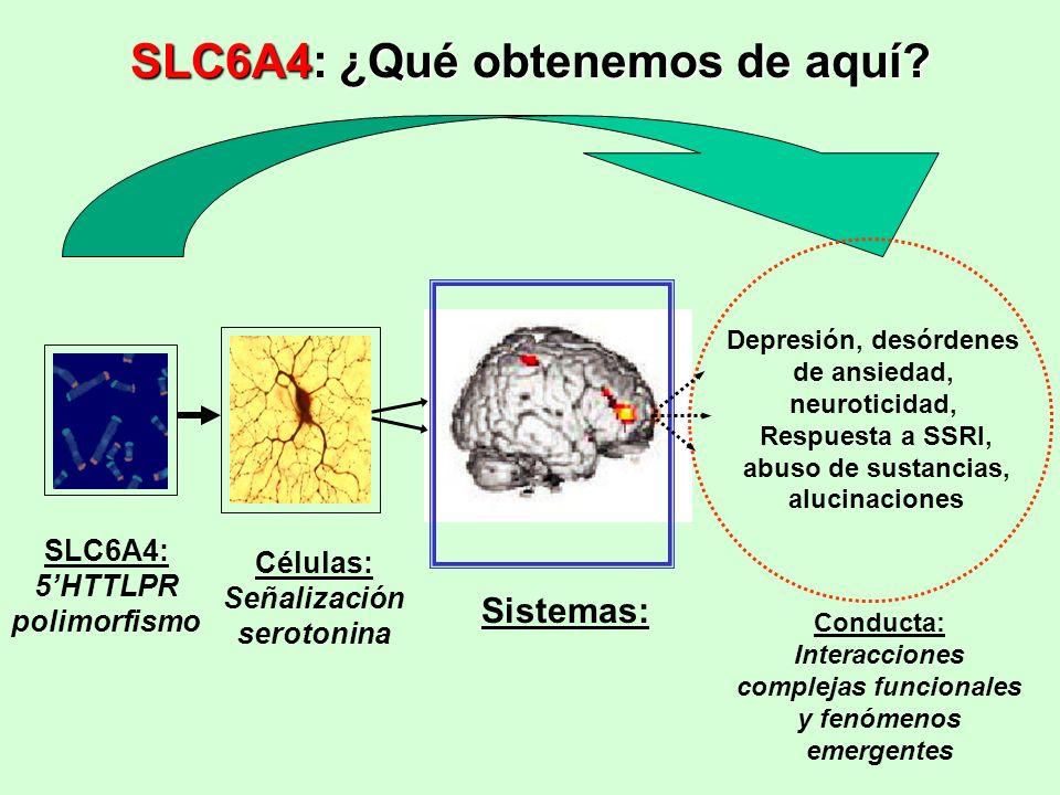 SLC6A4: 5HTTLPR polimorfismo Células: Señalización serotonina Sistemas: Depresión, desórdenes de ansiedad, neuroticidad, Respuesta a SSRI, abuso de su