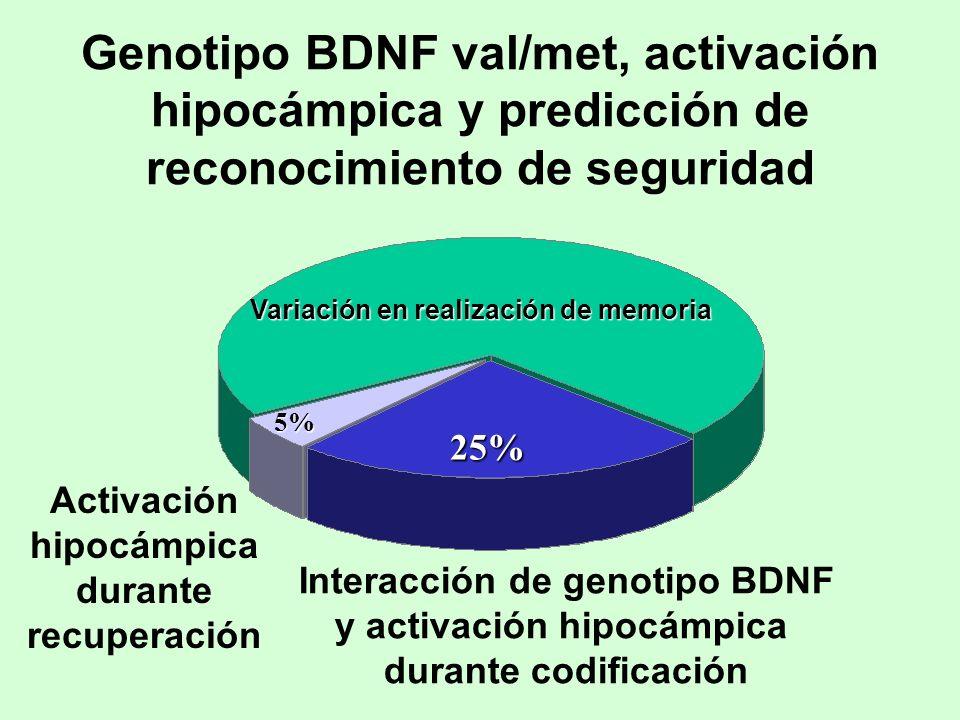 25% 5% Activación hipocámpica durante recuperación Interacción de genotipo BDNF y activación hipocámpica durante codificación Genotipo BDNF val/met, a