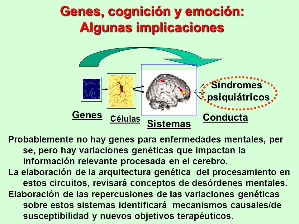 Genes, cognición y emoción: Algunas implicaciones Probablemente no hay genes para enfermedades mentales, per se, pero hay variaciones genéticas que im