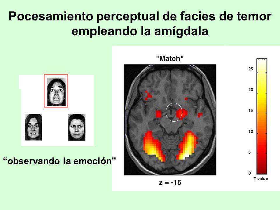 Pocesamiento perceptual de facies de temor empleando la amígdala observando la emoción