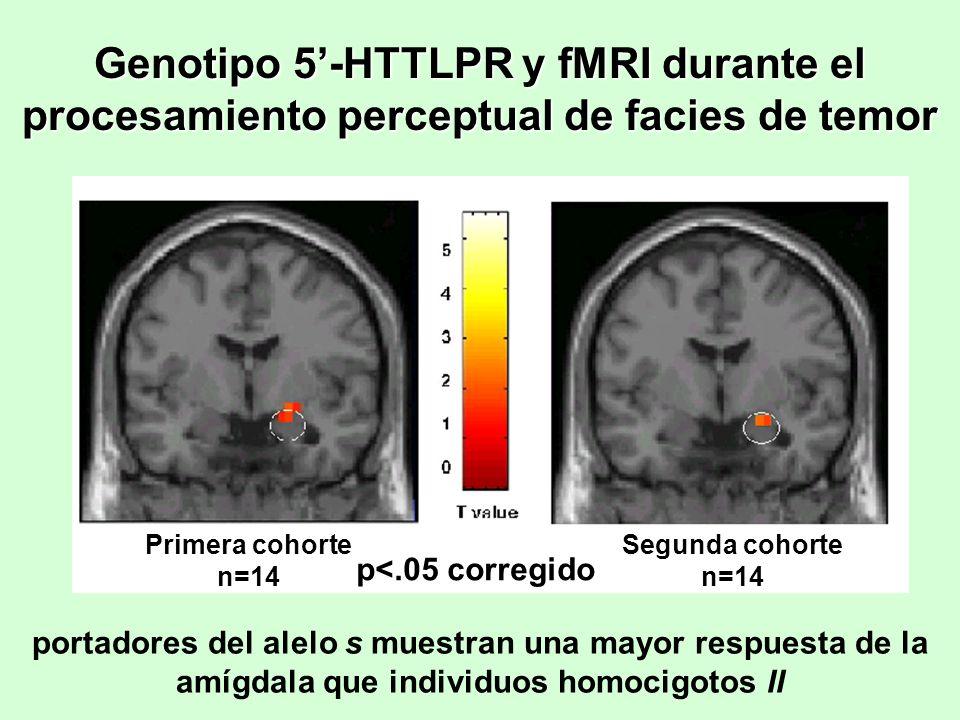 Genotipo 5-HTTLPR y fMRI durante el procesamiento perceptual de facies de temor portadores del alelo s muestran una mayor respuesta de la amígdala que