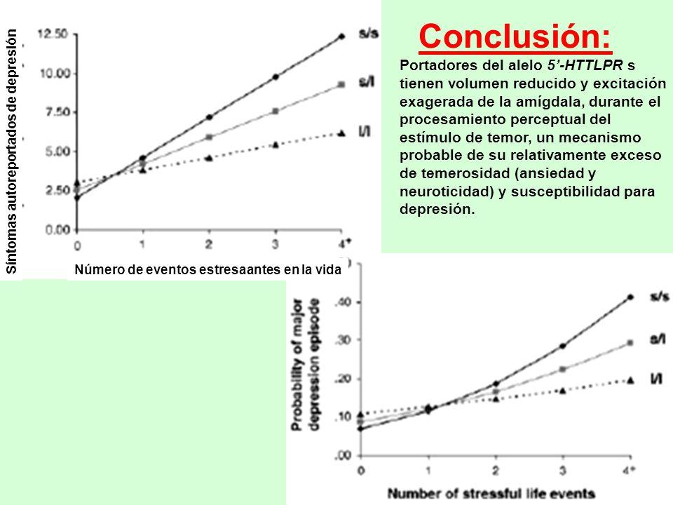 Conclusión: Portadores del alelo 5-HTTLPR s tienen volumen reducido y excitación exagerada de la amígdala, durante el procesamiento perceptual del est