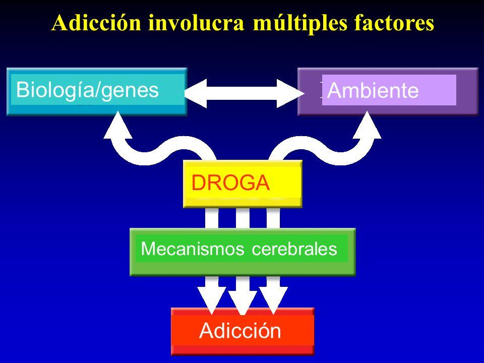 Adicción involucra múltiples factores Biología/genes Ambiente DROGA Mecanismos cerebrales Adicción