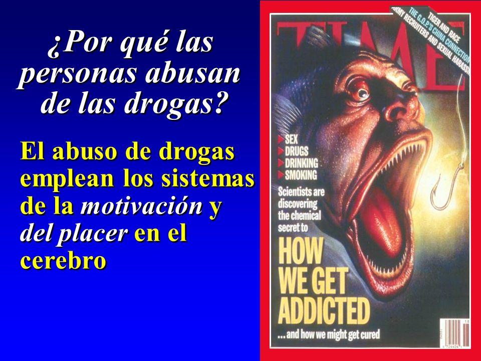 El abuso de drogas emplean los sistemas de la motivación y del placer en el cerebro El abuso de drogas emplean los sistemas de la motivación y del pla