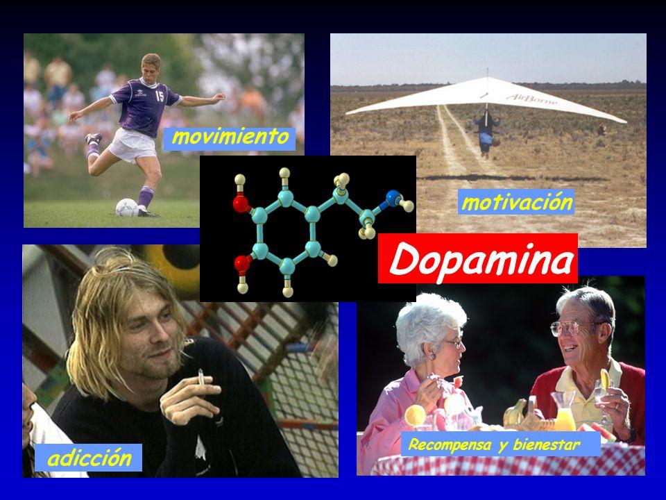 adicción Recompensa y bienestar motivación Dopamina movimiento