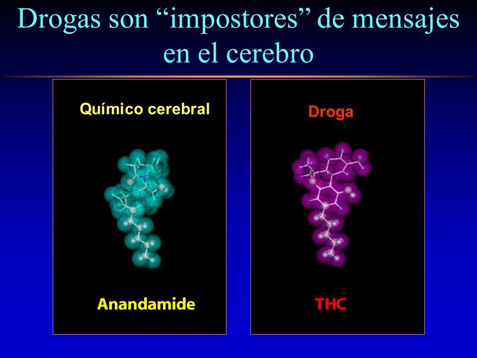 Drogas son impostores de mensajes en el cerebro Químico cerebral Droga