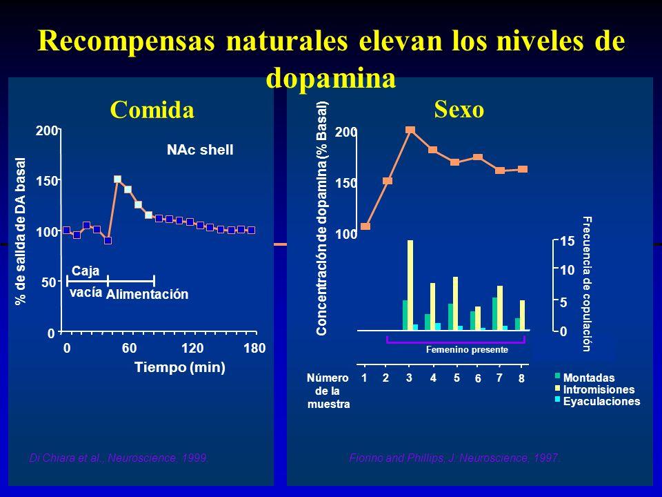 0 50 100 150 200 060120180 Tiempo (min) % de salida de DA basal NAc shell Caja vacía Alimentación Di Chiara et al., Neuroscience, 1999. Comida Montada