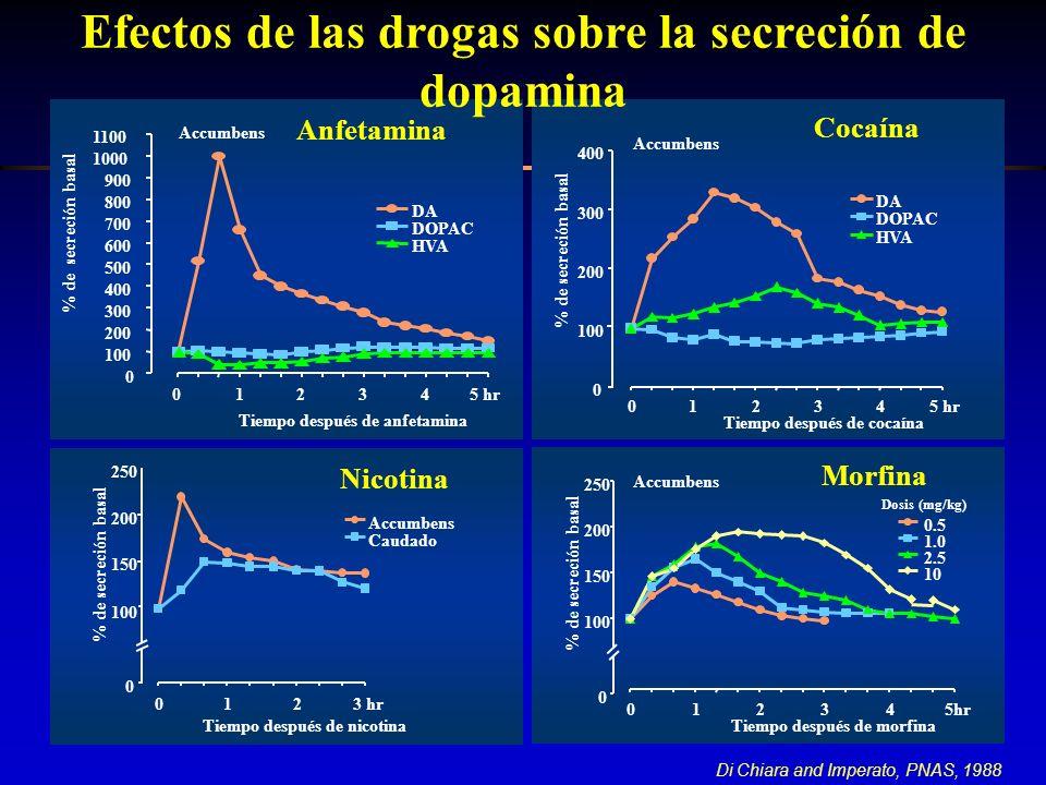 0 100 150 200 250 0123 hr Tiempo después de nicotina % de secreción basal Accumbens Caudado Nicotina Di Chiara and Imperato, PNAS, 1988 Efectos de las