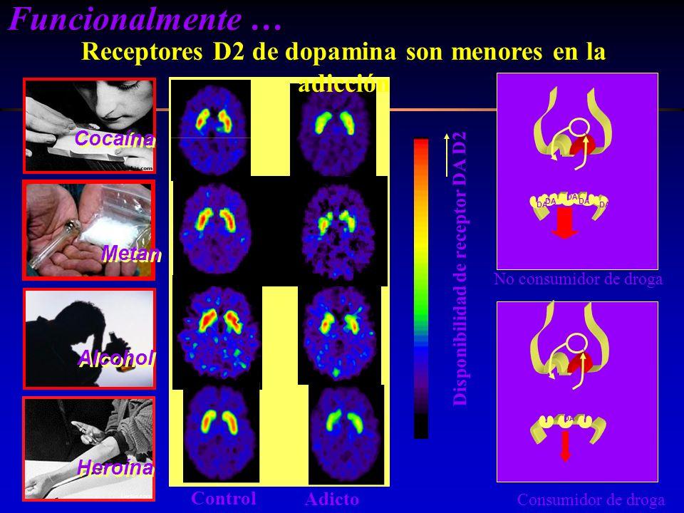 Disponibilidad de receptor DA D2 Control Adicto Cocaína Alcohol DA Reward Circuits DA Reward Circuits DA Consumidor de droga No consumidor de droga He
