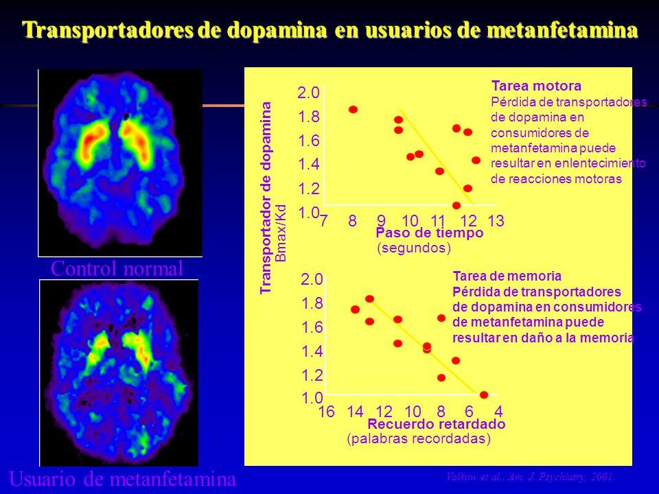 Transportadores de dopamina en usuarios de metanfetamina Control normal Usuario de metanfetamina Tarea motora Pérdida de transportadores de dopamina e