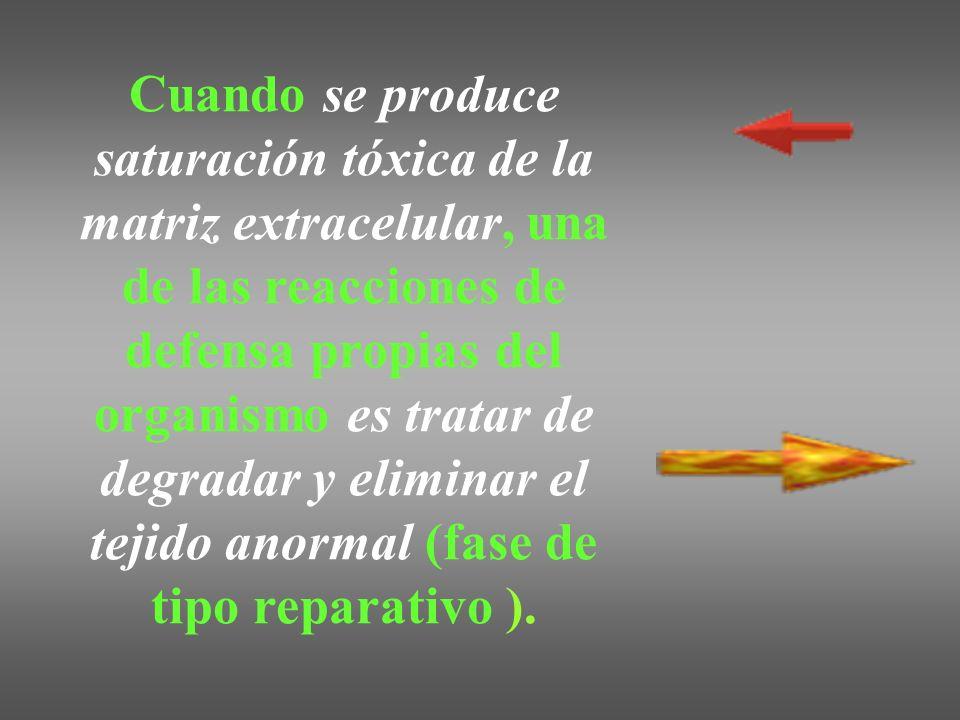 Cuando se produce saturación tóxica de la matriz extracelular, una de las reacciones de defensa propias del organismo es tratar de degradar y eliminar