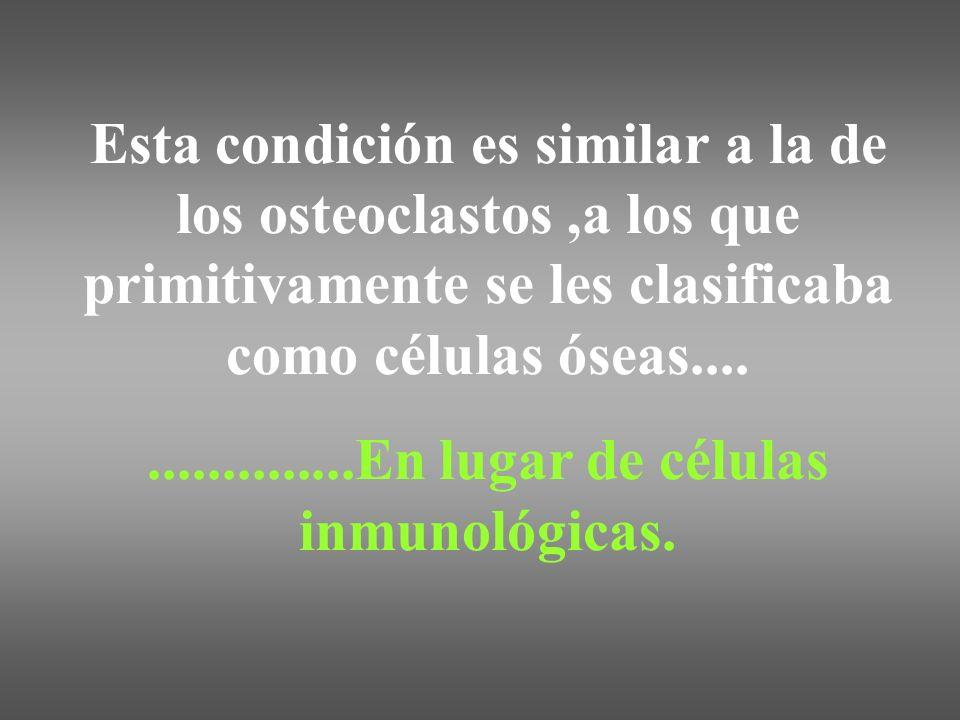 Esta condición es similar a la de los osteoclastos,a los que primitivamente se les clasificaba como células óseas..................En lugar de células