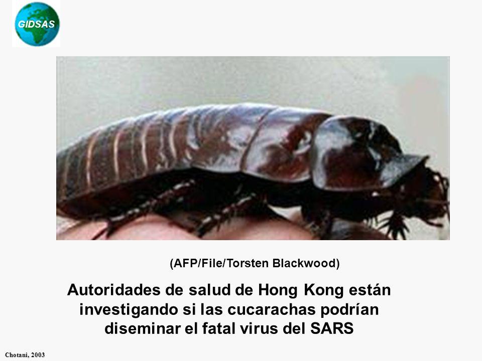 GIDSAS Chotani, 2003 Autoridades de salud de Hong Kong están investigando si las cucarachas podrían diseminar el fatal virus del SARS (AFP/File/Torste