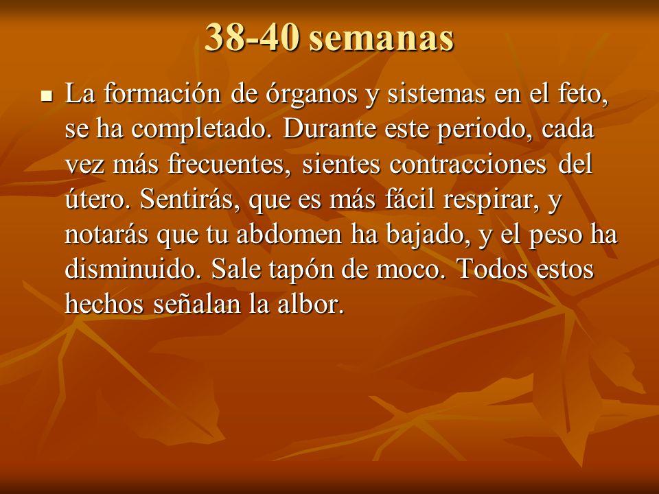 38-40 semanas La formación de órganos y sistemas en el feto, se ha completado. Durante este periodo, cada vez más frecuentes, sientes contracciones de