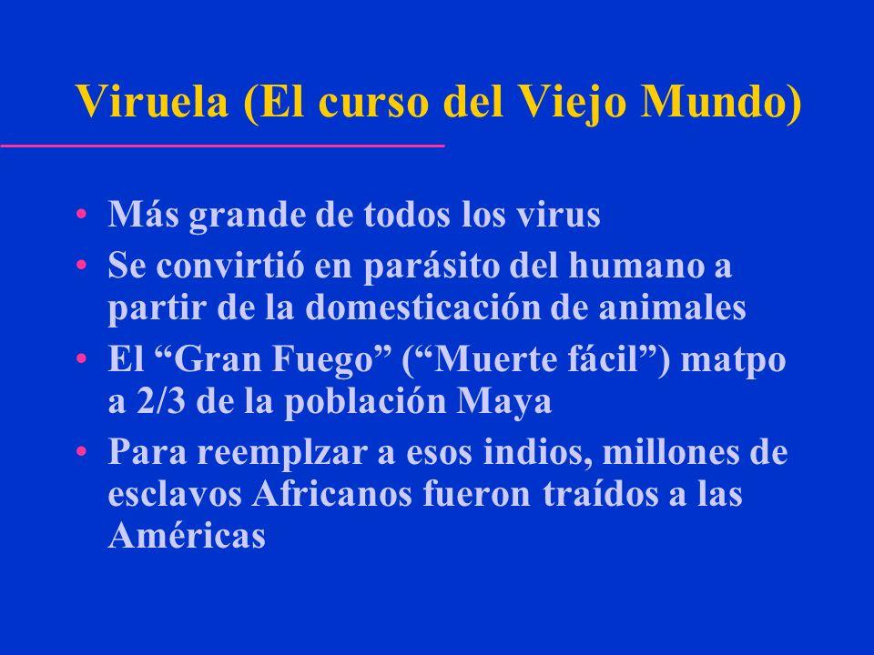 Viruela (El curso del Viejo Mundo) Más grande de todos los virus Se convirtió en parásito del humano a partir de la domesticación de animales El Gran