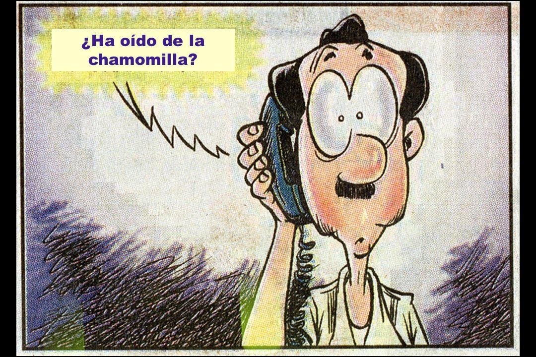 ¿Ha oído de la chamomilla?