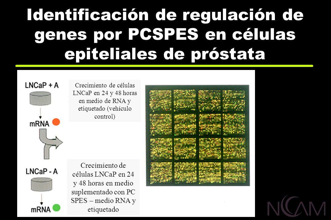 Identificación de regulación de genes por PCSPES en células epiteliales de próstata Nelson, 2001 Crecimiento de células LNCaP en 24 y 48 horas en medi