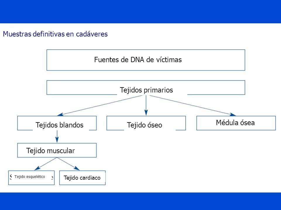 Muestras definitivas en cadáveres Fuentes de DNA de víctimas Tejidos primarios Tejidos blandosTejido óseo Médula ósea Tejido muscular Tejido esquelético Tejido cardiaco