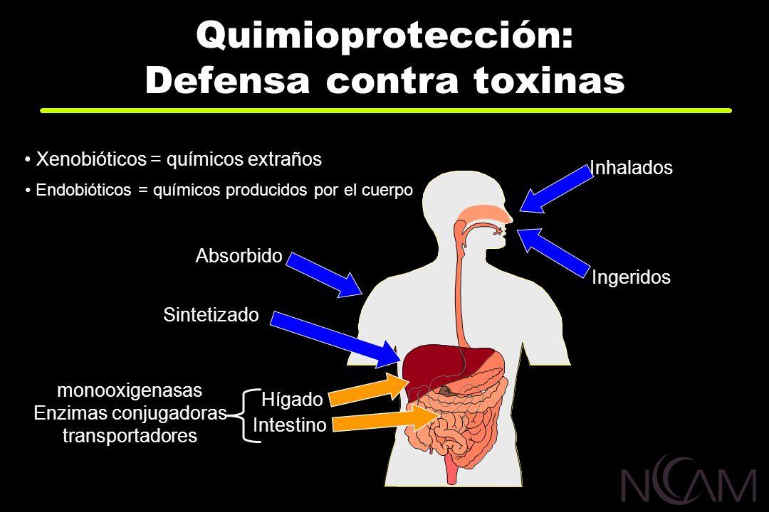 Quimioprotección: Defensa contra toxinas Inhalados Ingeridos Xenobióticos = químicos extraños Endobióticos = químicos producidos por el cuerpo Absorbi