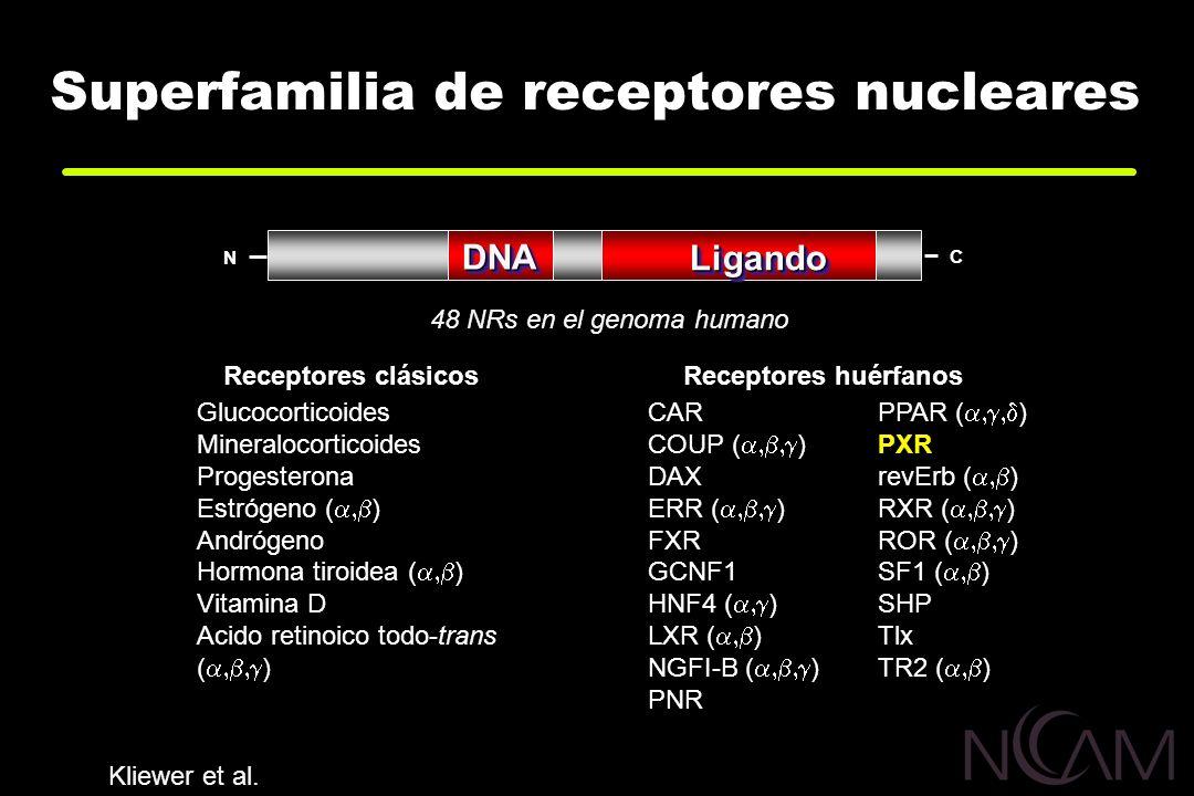 Superfamilia de receptores nucleares CAR COUP ( ) DAX ERR ( ) FXRGCNF1 HNF4 ( ) LXR ( ) NGFI-B ( ) PNR PPAR ( ) PXR revErb ( ) RXR ( ) ROR ( ) SF1 ( )