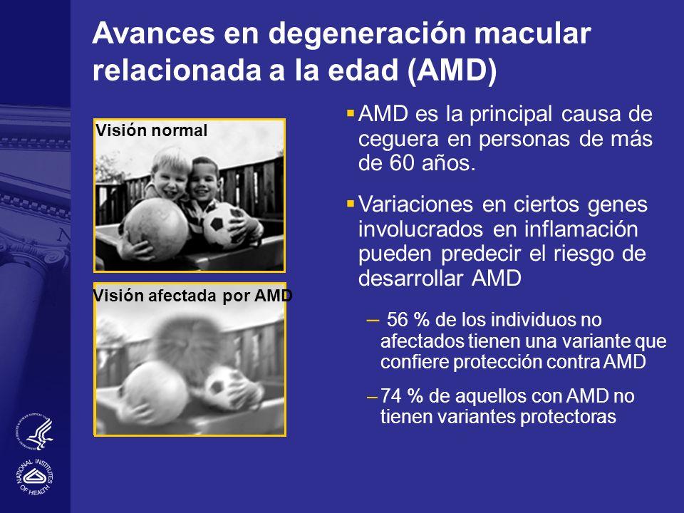 Avances en degeneración macular relacionada a la edad (AMD) AMD es la principal causa de ceguera en personas de más de 60 años. Variaciones en ciertos