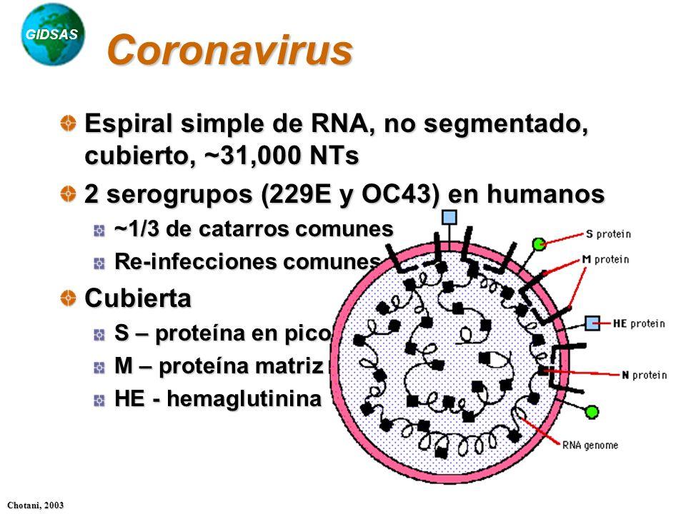 GIDSAS Chotani, 2003 Coronavirus Espiral simple de RNA, no segmentado, cubierto, ~31,000 NTs 2 serogrupos (229E y OC43) en humanos ~1/3 de catarros co