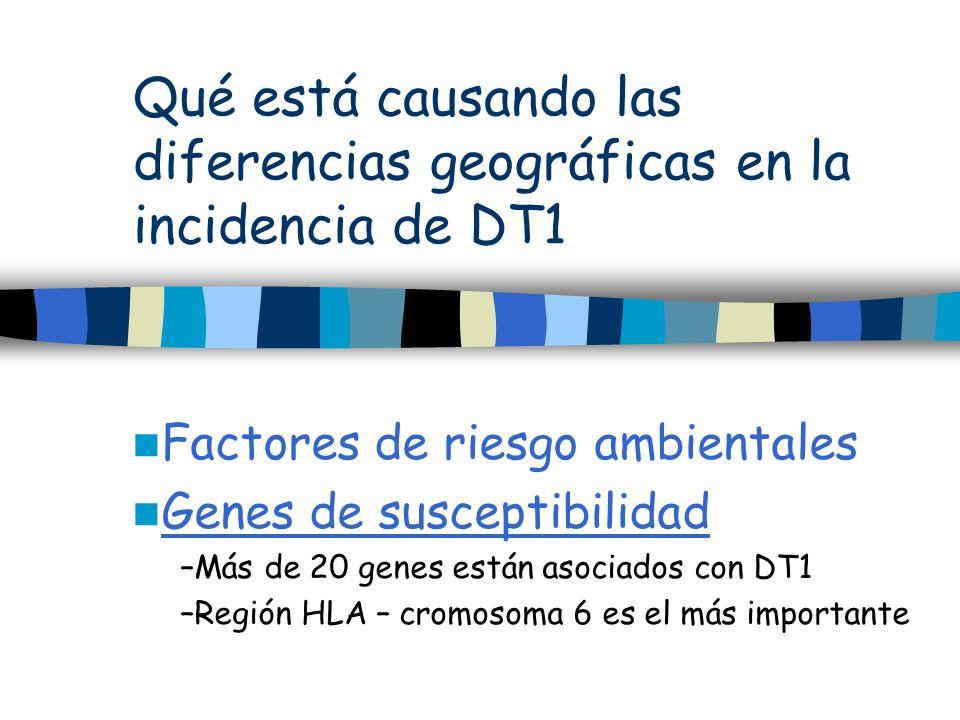 Qué está causando las diferencias geográficas en la incidencia de DT1 Factores de riesgo ambientales Genes de susceptibilidad –Más de 20 genes están a