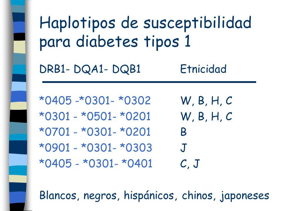 Haplotipos de susceptibilidad para diabetes tipos 1 DRB1- DQA1- DQB1 Etnicidad *0405 -*0301- *0302W, B, H, C *0301 - *0501- *0201W, B, H, C *0701 - *0