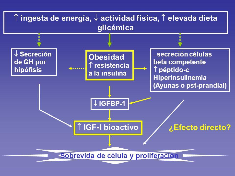 ingesta de energía, actividad física, elevada dieta glicémica Secreción de GH por hipófisis Obesidad resistencia a la insulina secreción células beta