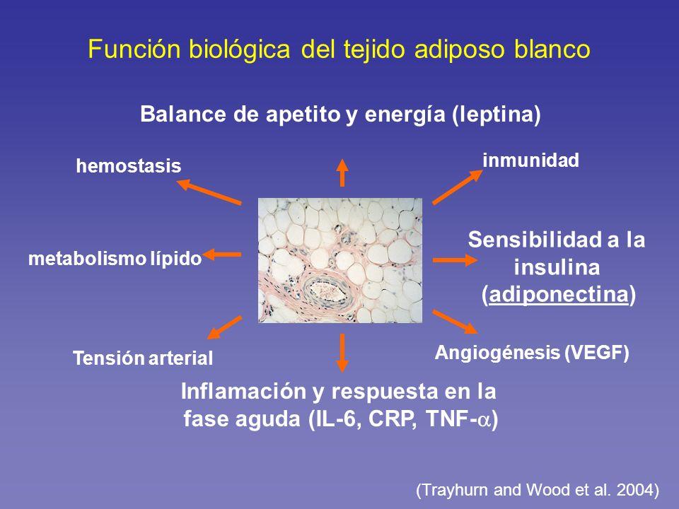 Función biológica del tejido adiposo blanco Balance de apetito y energía (leptina) hemostasis Sensibilidad a la insulina (adiponectina) inmunidad Tens