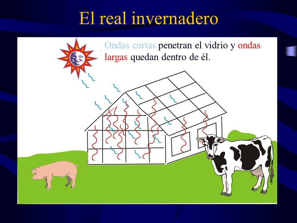 El efecto invernadero (atmosférico) Ejemplos de gases invernadero: H 2 O, CO 2, CH 4, CFC.