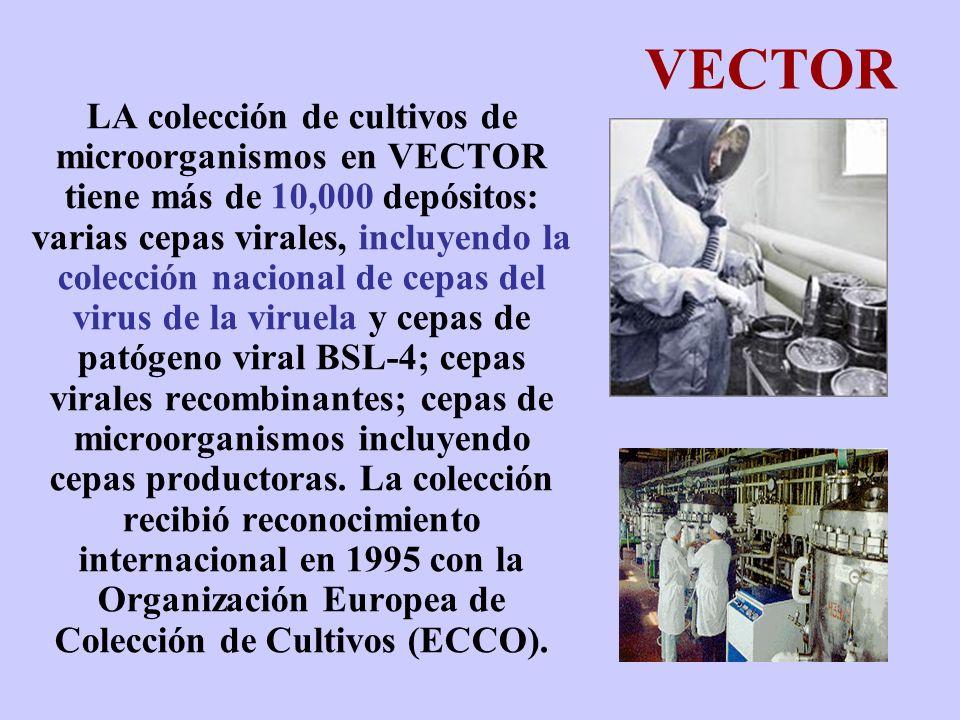 VECTOR LA colección de cultivos de microorganismos en VECTOR tiene más de 10,000 depósitos: varias cepas virales, incluyendo la colección nacional de