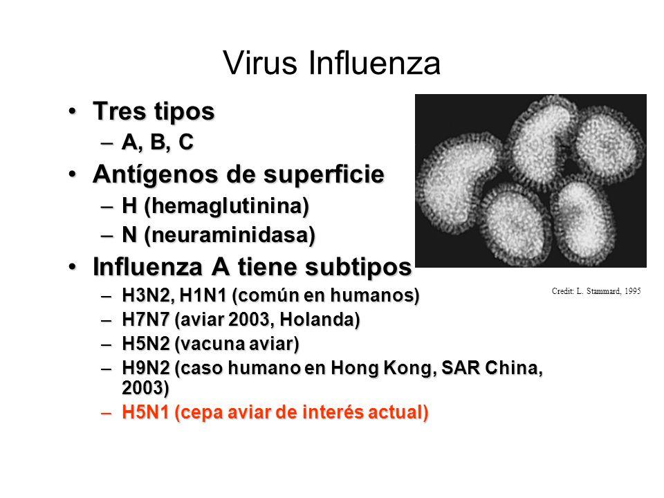 Virión de la Influenza