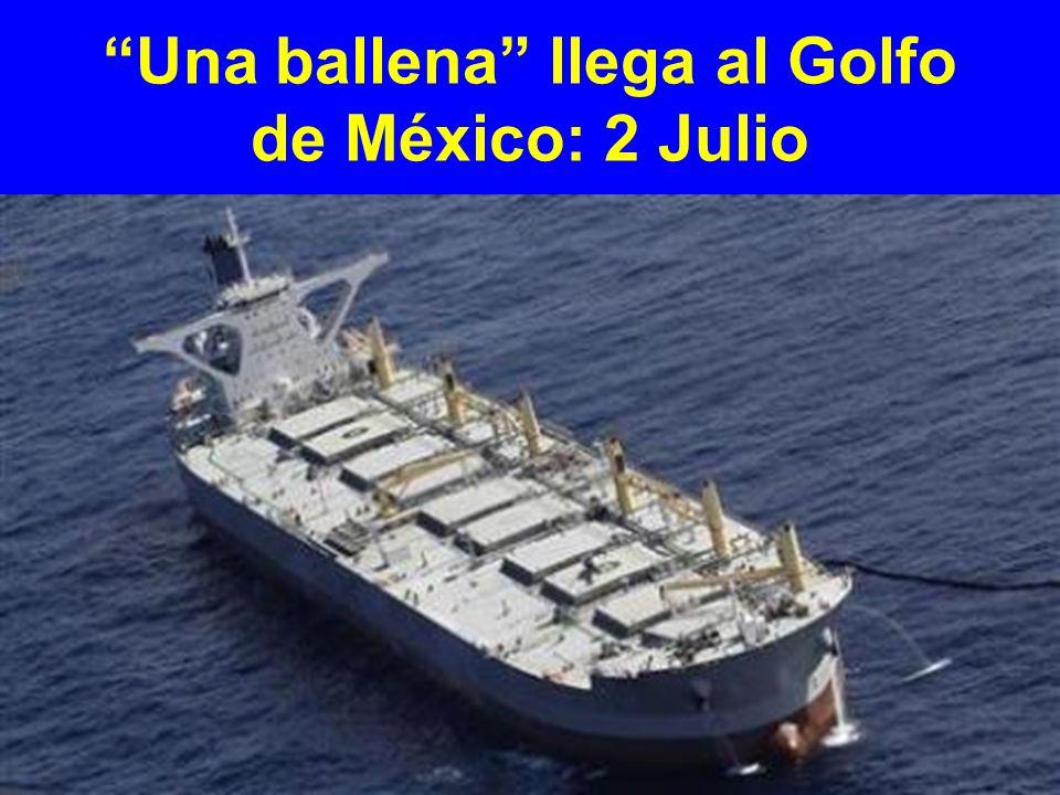 Una ballena llega al Golfo de México: 2 Julio