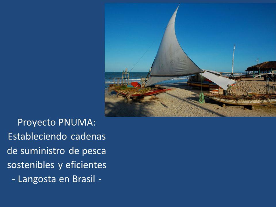 Proyecto PNUMA: Estableciendo cadenas de suministro de pesca sostenibles y eficientes - Langosta en Brasil -