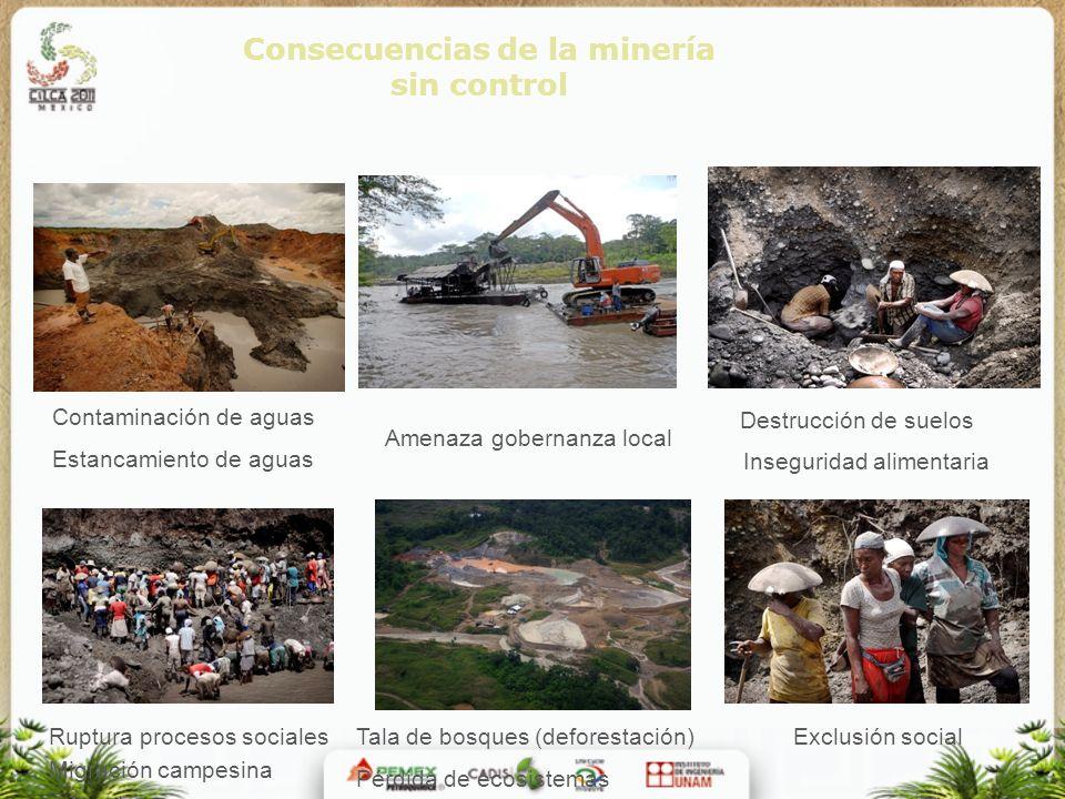 Consecuencias de la minería sin control Contaminación de aguas Estancamiento de aguas Amenaza gobernanza local Tala de bosques (deforestación) Pérdida