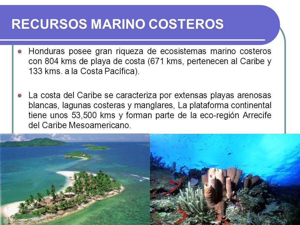 RECURSOS MARINO COSTEROS Honduras posee gran riqueza de ecosistemas marino costeros con 804 kms de playa de costa (671 kms, pertenecen al Caribe y 133